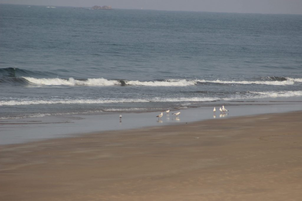 Ganpati Pule Beach abonthemove